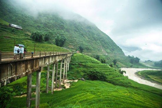 Green Lotus Travel