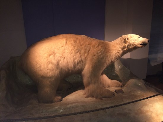 The Natural History Museum: photo3.jpg
