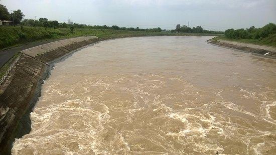 તારાપુર વિસ્તારમાં નીકળતી નહેરના પાણીમાં કેમિકલ ભળતા ખેડૂતોના પાકને નુકસાન, ફેક્ટરીના પાણીનું જોડાણ થયું હોવાનો આરોપ