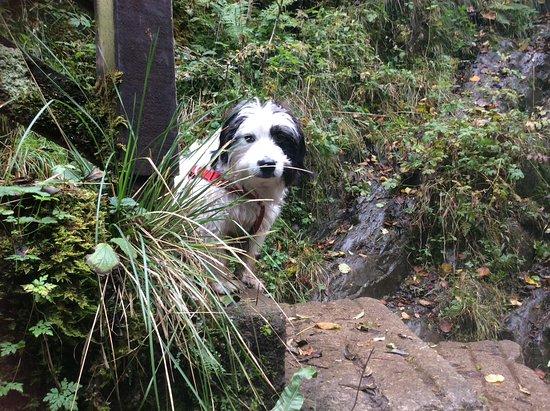 Burnthwaite Farm: Wonderful autumn walk in Ingleton falls....simply love it here!