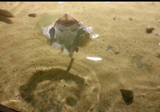 Triggerfish - Foto van Galway Atlantaquaria, Galway - TripAdvisor