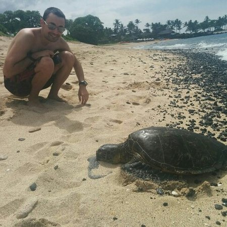 Holualoa, Hawaje: turtle