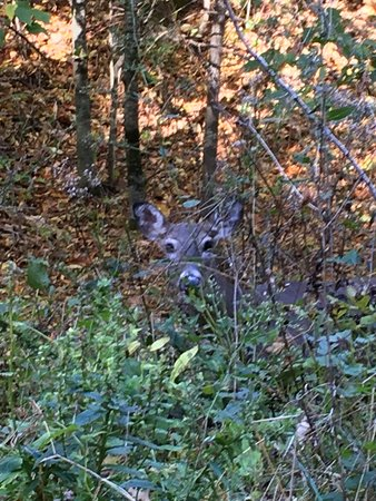 Found a deer hiding in the woods just 10' away.