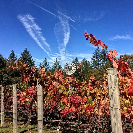 Napa Valley, CA: Gorgeous fall weather