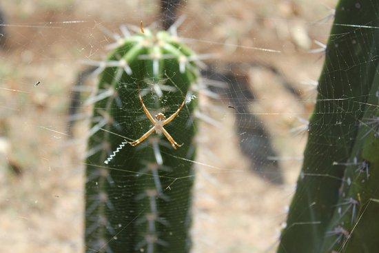 La Senda: Spider in the labyrinth