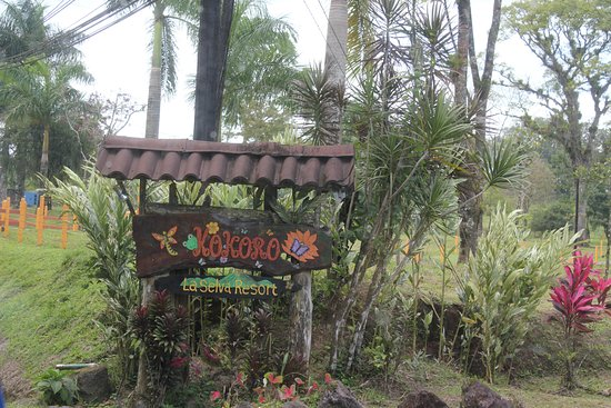 Hotel Kokoro Arenal: Beautiful Grounds
