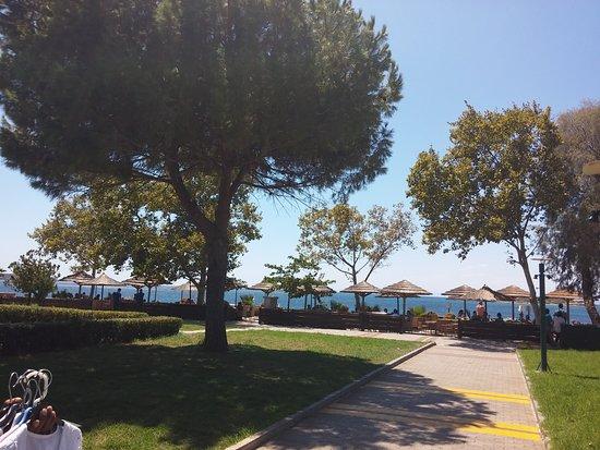 Notos Beach Restaurant: Havre de paix en bord de mer  !!  Végétation luxuriante. Je recommande. C'est magnifique et la v