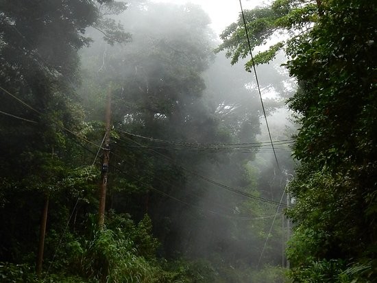 Trapp Family Lodge: nel pomeriggio sale la nebbia nel bosco nebuloso...che fenomeno...