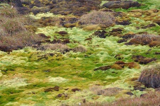 Ilulissat, Greenland: Muschio e permafrost protetto dal passaggio con la passerella