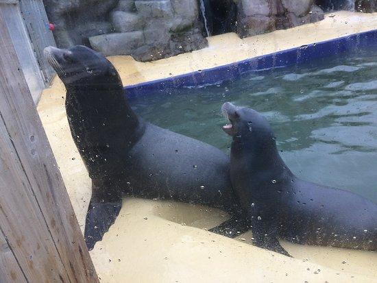 Gweek, UK: Sea lions