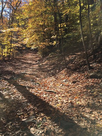 Blue Hills Reservation: Beautiful hike with amazing views.