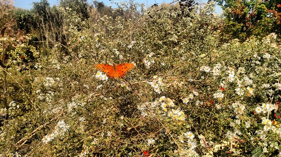 Lake Lure, NC: One butterfly among flowers