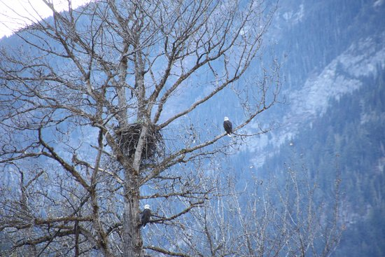 Stuie, Canadá: Bald Eagles and nest