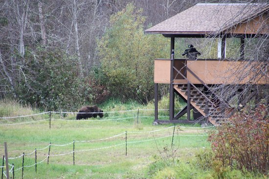 Stuie, Canada: Bear viewing platform