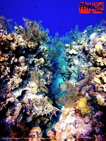 Long Caye, Belize: Top of the reef - Aquarium Dive Site !!!