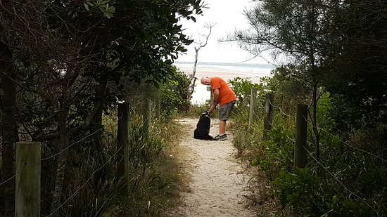 Woolgoolga, Australia: What a great spot for relaxing with the dogs...and kids