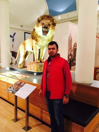 Paisley Museum and Art Galleries: Small but entertaining enough... The Lion just took my Heart...