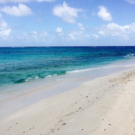 Simpson Bay, St Martin / St Maarten: Prickly Pear!!! Gorgeous.