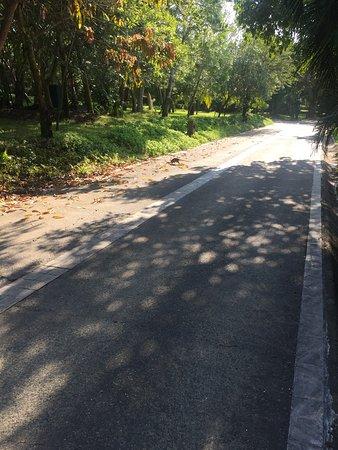 فور سيزونز ريزورت بونتا ميتا: Road to village, note the Armadillo crossing road.