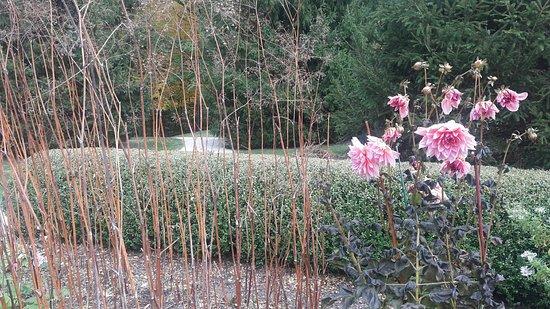 Lenox, MA: dahlias (not easy to grow!)