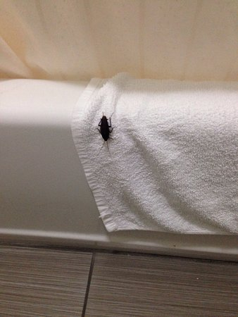 Wine Country Inn: An unwelcome guest in our bathroom