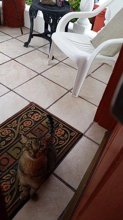 "Punta Piedra: ""Hammie"" the cat"