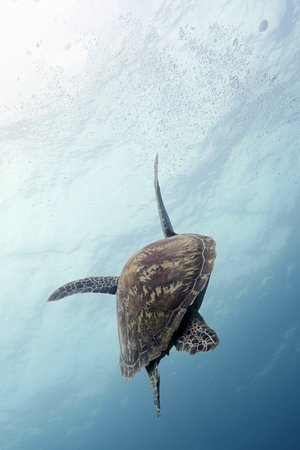 Dive with turtles all year around.