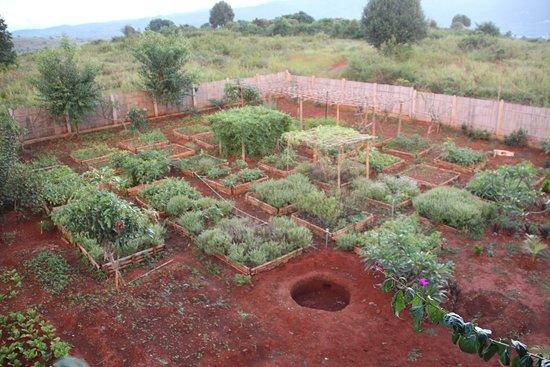 Beautiful Vegetable Garden Pics