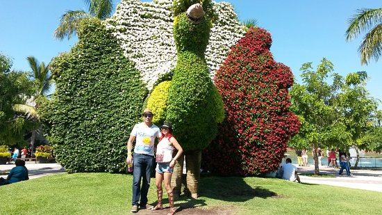 jardines de mexico bellos animales hechos de flores como este pavorreal
