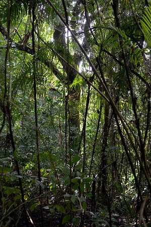 Nicoya, Costa Rica: Tropische Vegetation