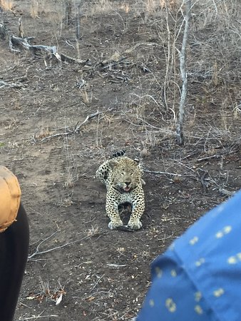 Tydon Bush Camp: Leopard!