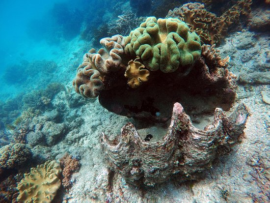 Reef Daytripper: Giant clam shell with coral