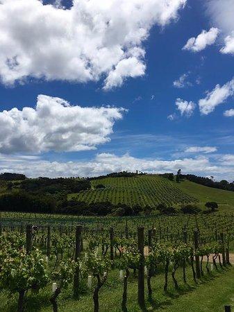 Waiheke-eiland, Nieuw-Zeeland: Amazing views