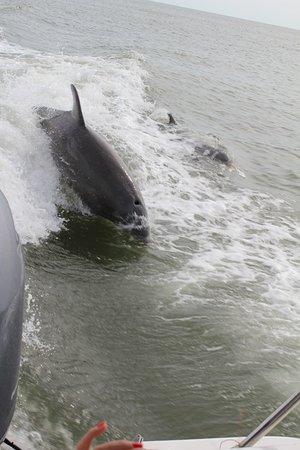 Dreamlander Tours: les dauphins qui suivent la trace du bateau
