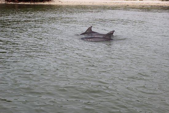Dreamlander Tours: des dauphins juste a 3 mètres du bateau