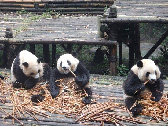 Dujiangyan Panda Base of the Giant Panda Research Center