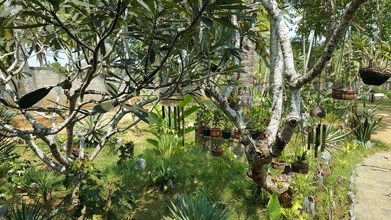 Kahandamodara, Σρι Λάνκα: Сад на внутреннем дворике