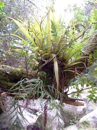 Pohara, نيوزيلندا: 10th