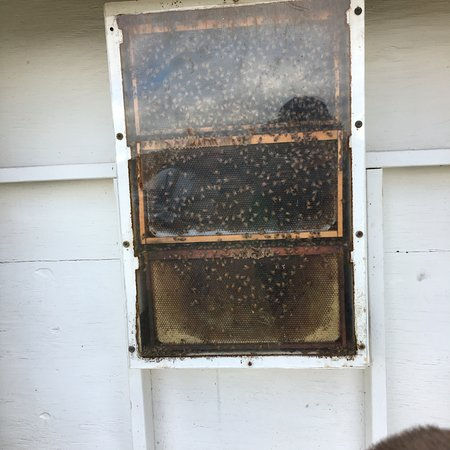 Monmouth Junction, NJ: Bee Viewing Window