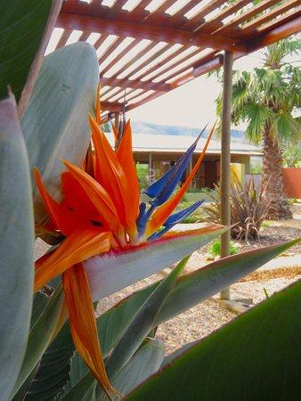 Kirkwood, Sudáfrica: Strelitia flower