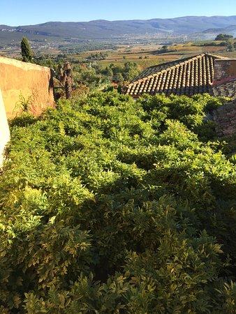 Le Clos de la Glycine : That is a grape arbor; beneath it is a dining terrace.