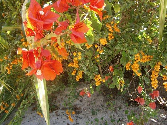 Petite Calivigny, Grenada: Blommor nedanför hotellet.