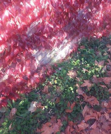 San Lorenzo della Rabatta: colori di autunno