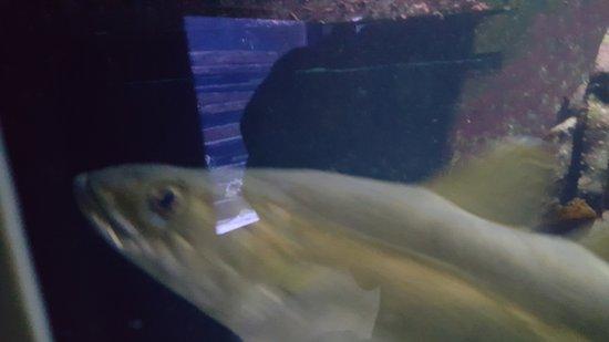 Aquarium Kiel Foto