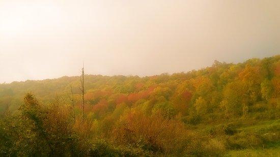 Condove, Italie : i boschi