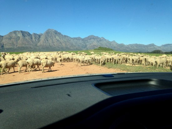 Bartholomeus Klip Farmhouse: You may see sheep on your way in from the highway