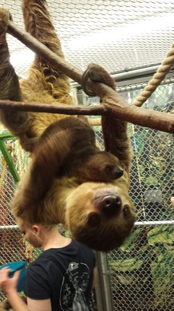 Branson, MO: Such a wonderful experience, seeing this momma sloth and her little one.