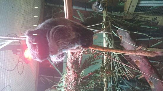 Kirkley Hall Zoological Gardens: DSC_0008_large.jpg