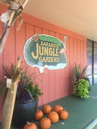 Picture Of Sarasota Jungle Gardens Sarasota Tripadvisor