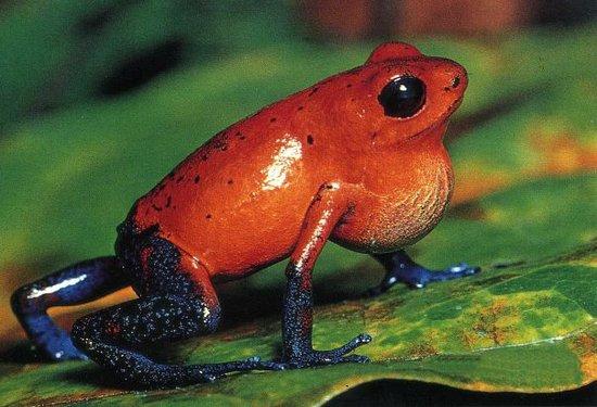 Monteverde Frog Pond